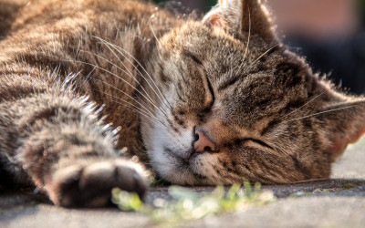 Schlaf, Kindlein, schlaf