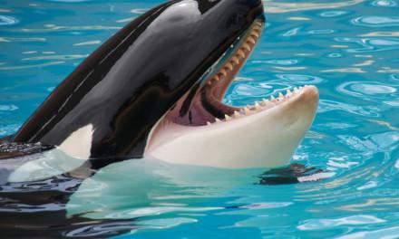 Von kleinen Walen und Menschenkindern